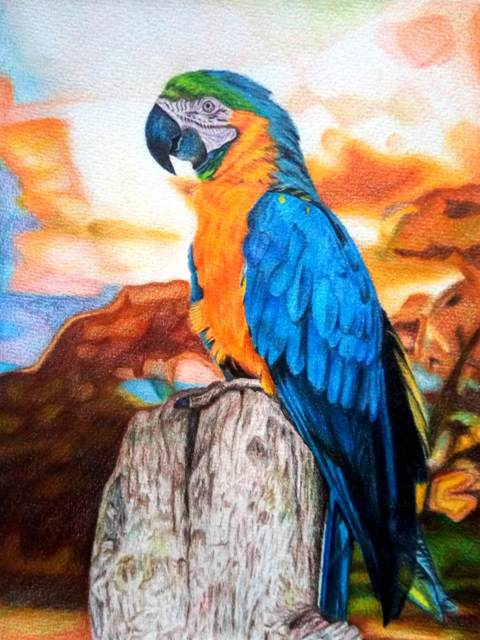 Parrot drawing with colour pencils